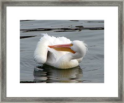 Framed Print featuring the photograph Texas Gulf Coast White Pelican by Linda Cox