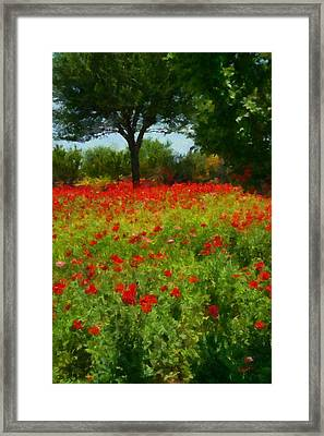 Texas Hill Country Corn Poppies Framed Print