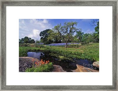 Texas Hill Country - Fs000056 Framed Print