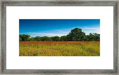 Texas Hill Country Meadow Framed Print