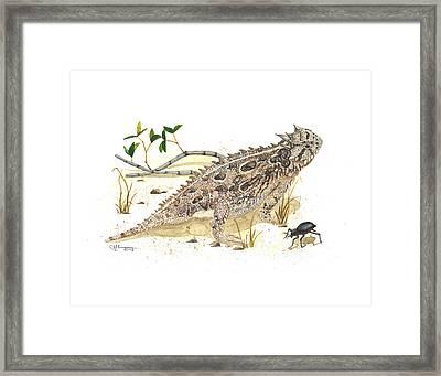 Texas Horned Lizard Framed Print