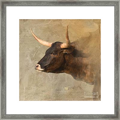 Texas Longhorn # 3 Framed Print by Betty LaRue