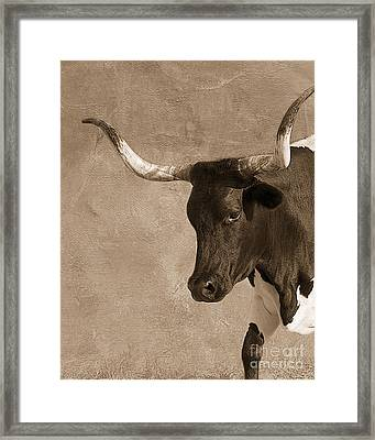 Texas Longhorn #6 Framed Print by Betty LaRue