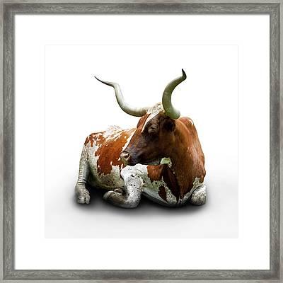 Texas Longhorn Bull Framed Print by Charles Beeler