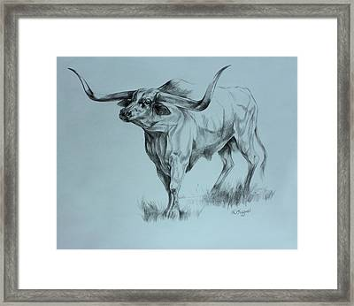 Texas Longhorn Framed Print by Derrick Higgins