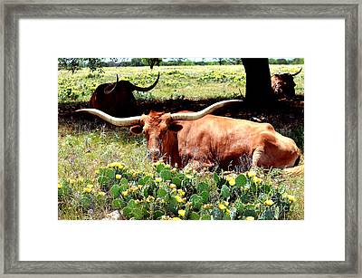 Texas Longhorns 2 Framed Print