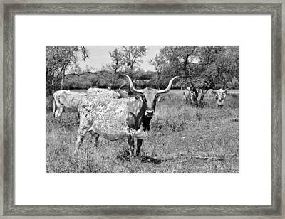 Texas Longhorns A Texas Icon Framed Print by Christine Till