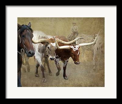 Cattle Station Framed Prints