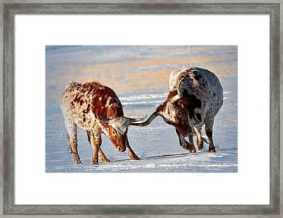 Texas Longhorns Framed Print by Lena  Owens OLena Art