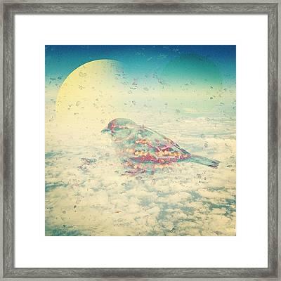 Little Bird In Texas Sky Framed Print