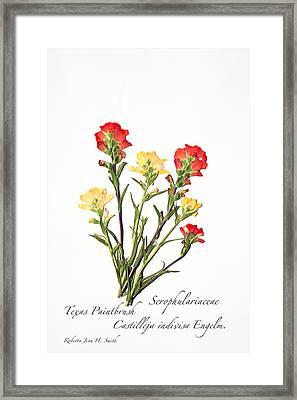 Texas Paintbrush 1 Framed Print