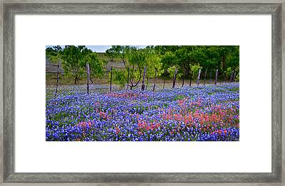 Framed Print featuring the photograph Texas Roadside Heaven -bluebonnets Paintbrush Wildflowers Landscape by Jon Holiday
