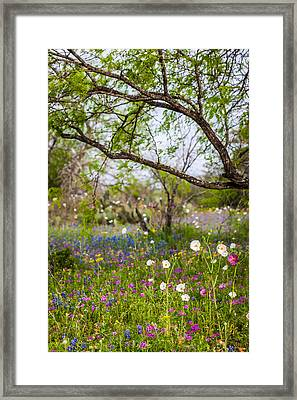Texas Roadside Wildflowers 732 Framed Print by Melinda Ledsome