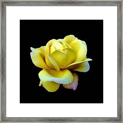 Texas Rose Framed Print
