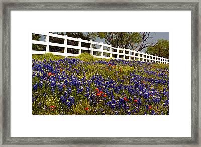 Texas Spring Framed Print by Brian Kerls