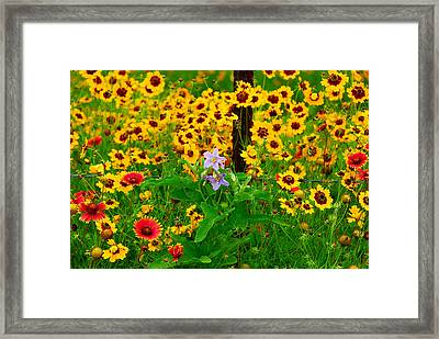 Texas Spring Delight Framed Print