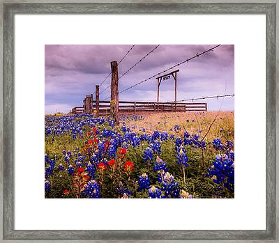 Texas Spring Fence Framed Print
