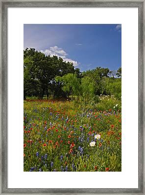 Texas Spring Spectacular Framed Print