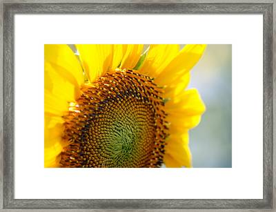 Texas Sunflower Framed Print