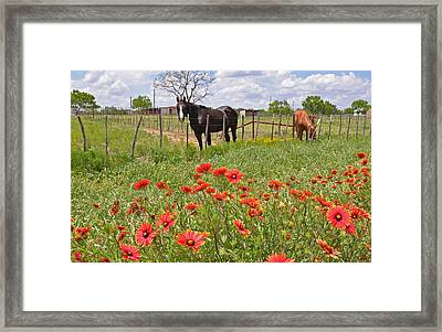 Texas Twosome Framed Print by Lynn Bauer