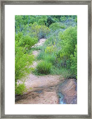 Texas Wilderness Spring Framed Print