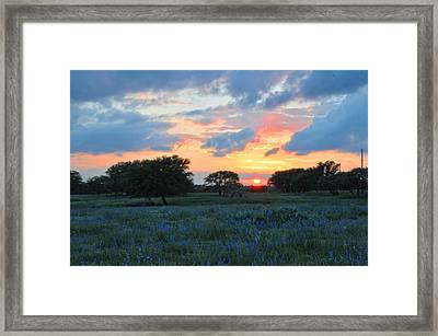 Texas Wildflower Sunset  Framed Print