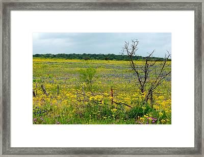Texas Wildflowers And Mesquite Tree Framed Print