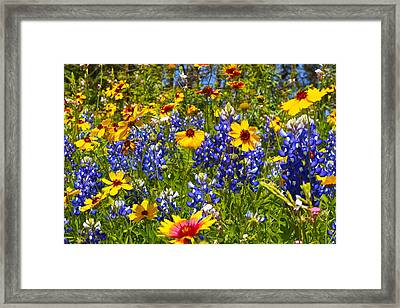 Texas Wildflowers Framed Print by John Babis