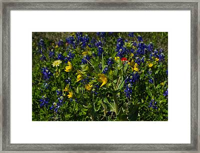 Texas Wildflowers Framed Print by Kelly Kitchens