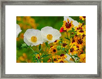 Texas Wildflowers Framed Print