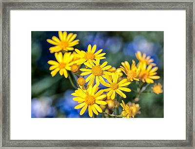 Texas Wildflowers 1 Framed Print