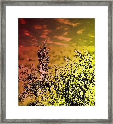Texas Yucca Flower Framed Print