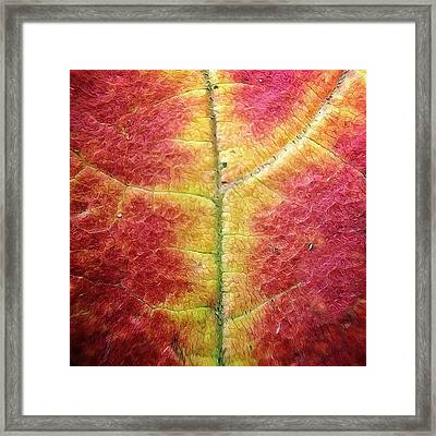 Textural Intricacy Framed Print by Natasha Marco