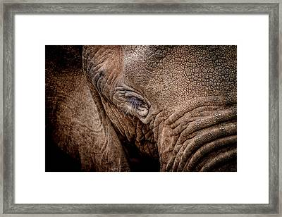 Framed Print featuring the photograph Texture Collection by Mike Gaudaur