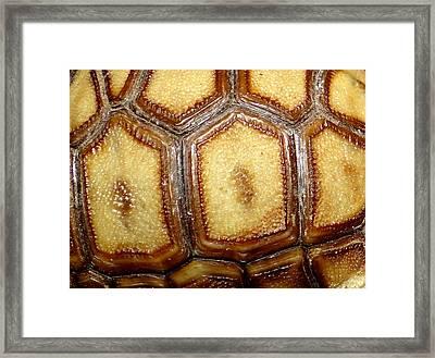 Texture Tortoise Shell Framed Print