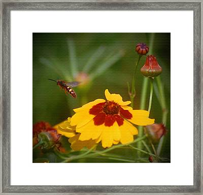 Framed Print featuring the photograph Textured Bee by Leticia Latocki