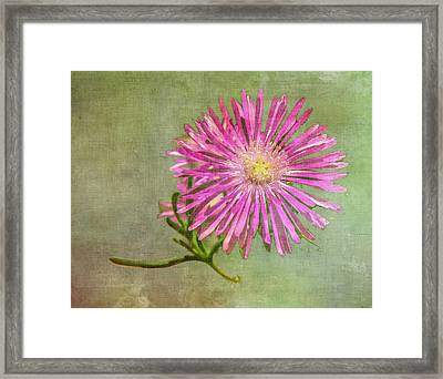 Textured Daisy Framed Print