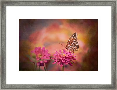 Textured Gulf Fritillary Framed Print by Joel Olives