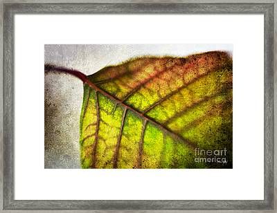 Textured Leaf Abstract Framed Print