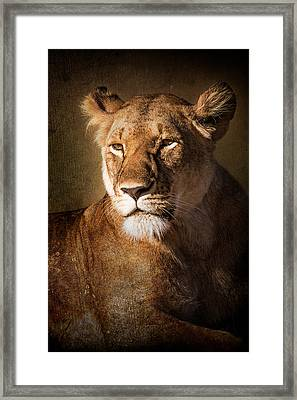 Framed Print featuring the photograph Textured Lioness Portrait by Mike Gaudaur