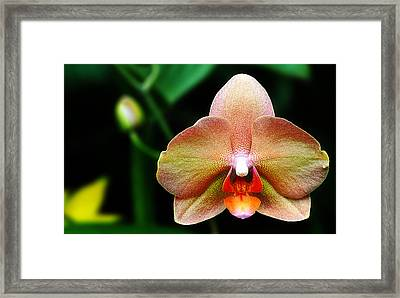 Textured Orchid Framed Print
