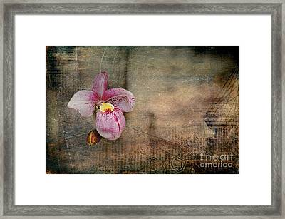 Framed Print featuring the photograph Textured Orchid by Vicki DeVico
