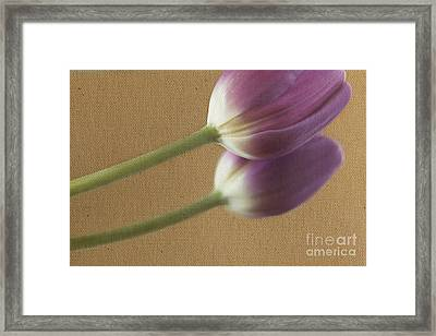 Textured Purpletulip Framed Print by Eden Baed