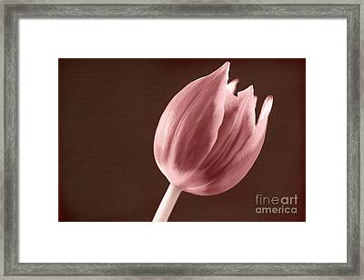 Textured Sepia Tulip Framed Print by Eden Baed