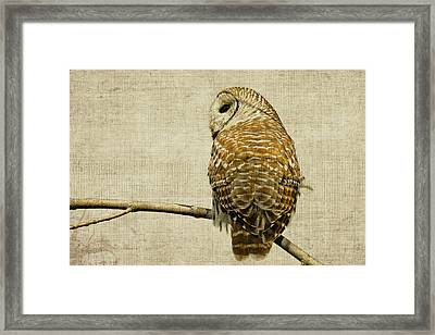 Textured Strix Varia Framed Print by Michel Soucy