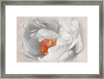 Textured Summer Rose Framed Print by Eden Baed
