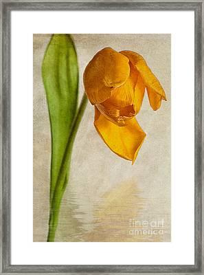 Textured Tulip Framed Print by John Edwards