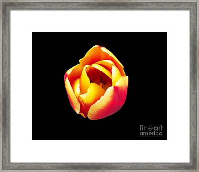 Framed Print featuring the photograph Textured Yellow And Pink Tulip by Gena Weiser