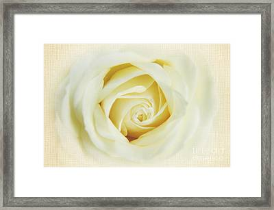 Textured White Avalanche Rosd Framed Print