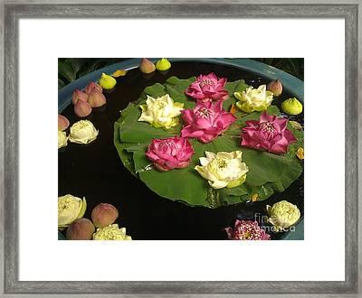 Thai Lilies  Framed Print